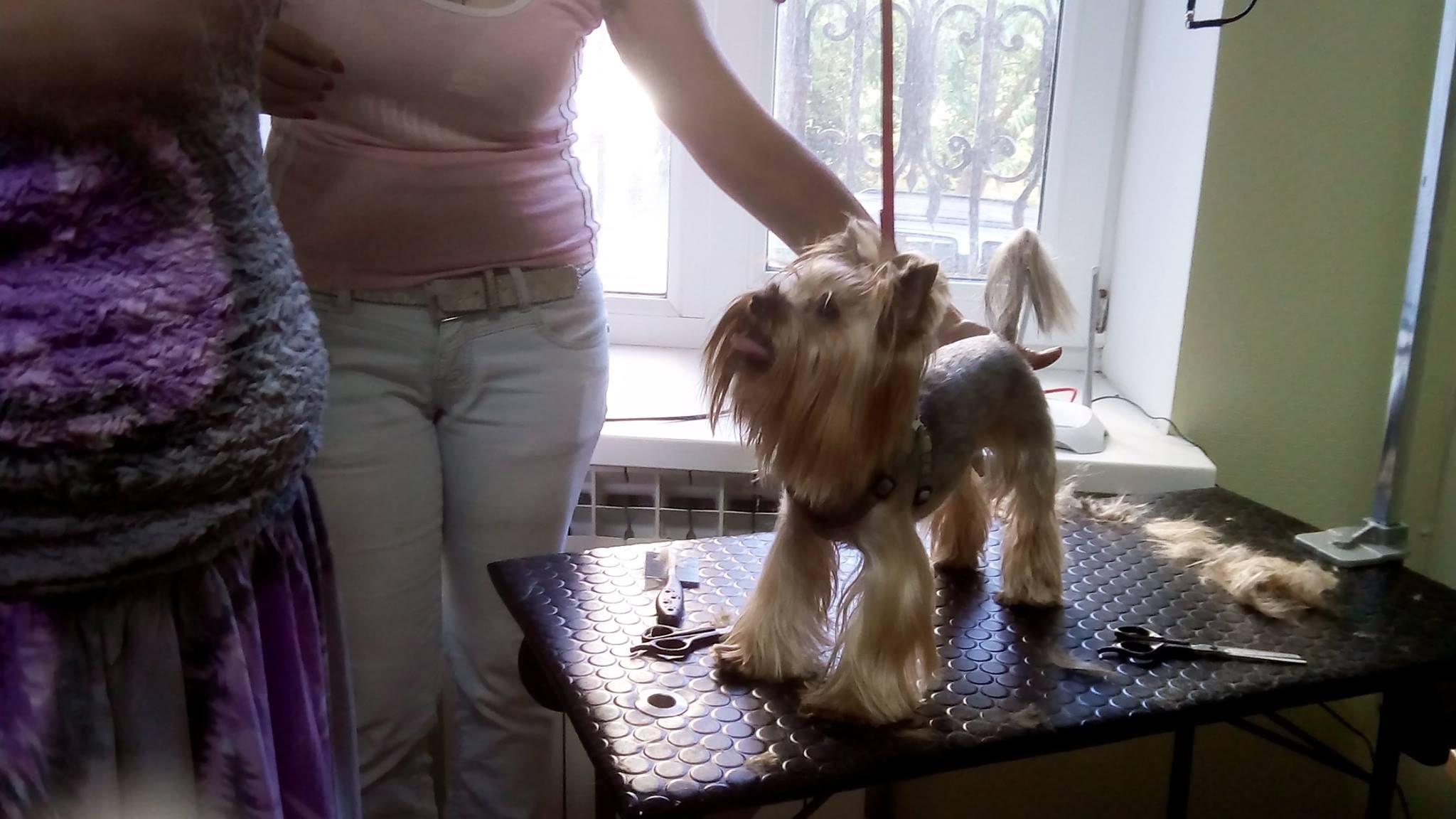 СТРИЖКА, ТРИММИНГ собак (домашняя и выставочная)