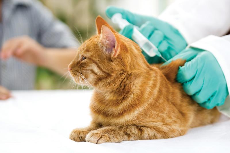 Распространенные болезни кошек - причины, симптомы, лечение