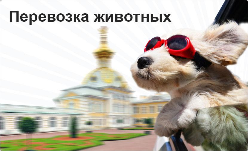 Такси для животных в Кропивницком